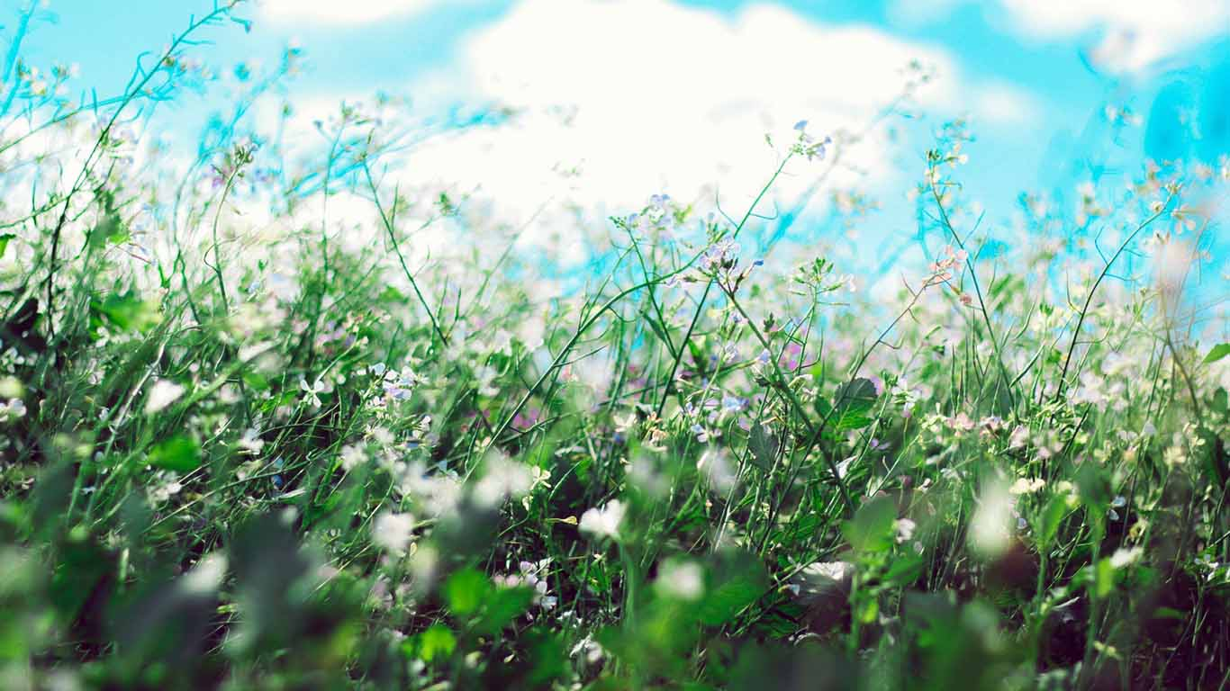 Allergia ai pollini primavera